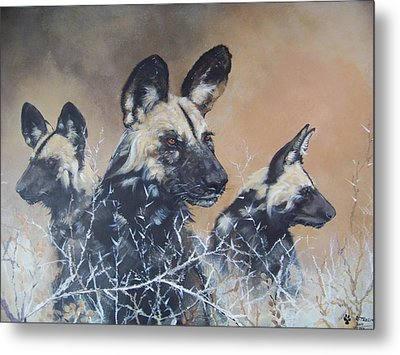 Wild Dog Trio Metal Print by Robert Teeling
