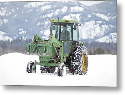 Winter Feeding Metal Print by Diane Bohna