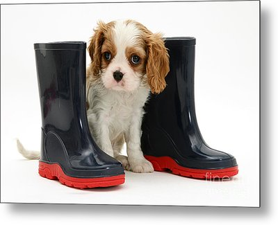 Puppy With Rain Boots Metal Print by Jane Burton