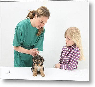 Vet Giving Pup Its Primary Vaccination Metal Print by Mark Taylor