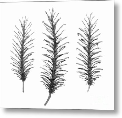 X-ray Of Pine Cones Metal Print by Ted Kinsman