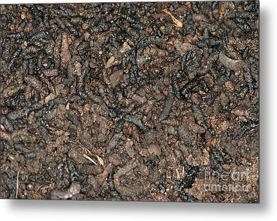 Guano Metal Print by Ted Kinsman