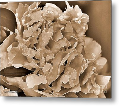 Peony Named Shirley Temple Metal Print by J McCombie