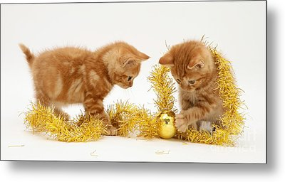 Red Tabby Kittens And Tinsel Metal Print by Jane Burton