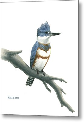 Belted Kingfisher Perched Metal Print by Kalen Malueg