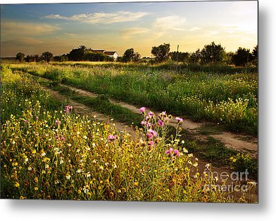 Countryside Landscape Metal Print by Carlos Caetano