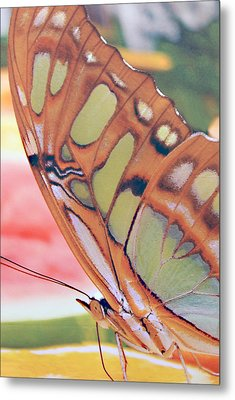 Golden Butterfly Metal Print by Don  Wright