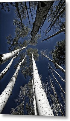 Towering Aspens Metal Print by Timothy Johnson