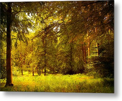 Forest Metal Print by Svetlana Sewell
