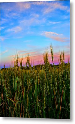 A View From Crop Level Metal Print by Bill Tiepelman