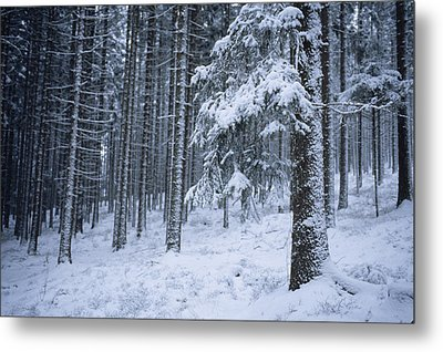 A Winter View Of The Metal Print by Taylor S. Kennedy