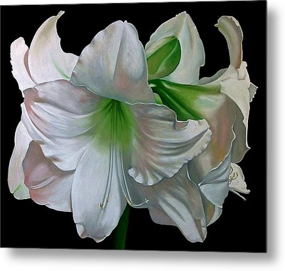 Amaryllis Metal Print by Doug Strickland
