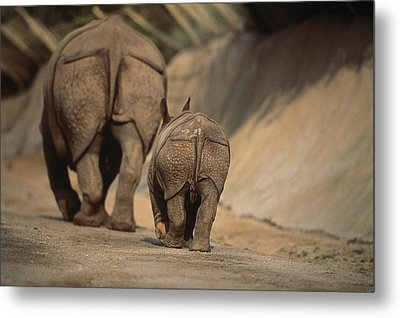 An Indian Rhinoceros And Her Baby Metal Print by Michael Nichols