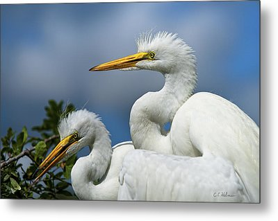 Anxiously Waiting Metal Print by Christopher Holmes