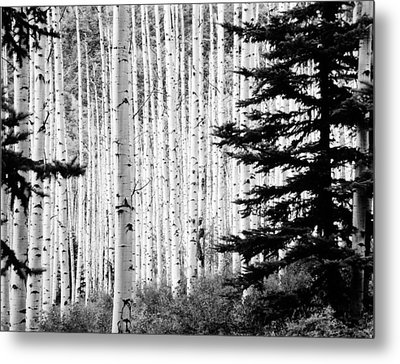 Aspen Afternoon Metal Print by Allan McConnell
