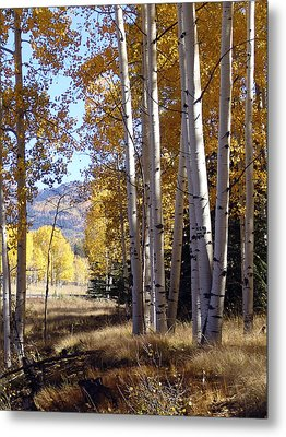 Autumn Chama New Mexico Metal Print by Kurt Van Wagner