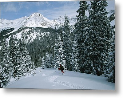 Backcountry Skiing Into An Evergreen Metal Print by Tim Laman