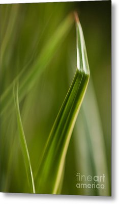 Blades Abstract 3 Metal Print by Mike Reid