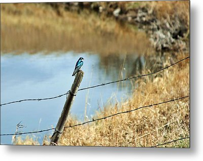Blue Bird Metal Print by Mario Brenes Simon
