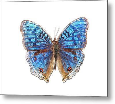 Brush-footed Butterfly Of Madagascar Metal Print by MajchrzakMorel