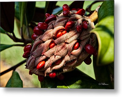 Bursting Forth Metal Print by Christopher Holmes
