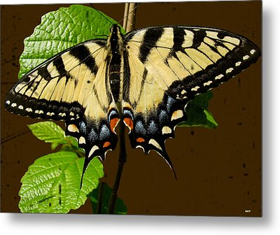 Butterfly Collection Design Metal Print by Debra     Vatalaro