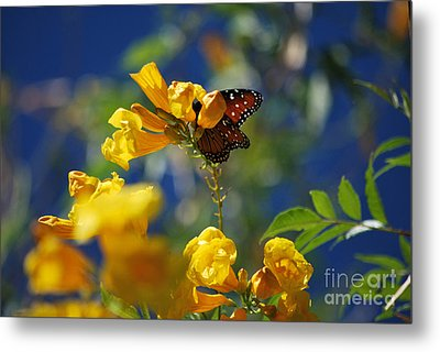 Butterfly Pollinating Flowers  Metal Print by Donna Greene