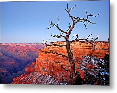 Canyon Tree Metal Print by Peter Tellone