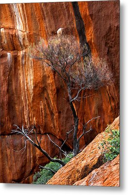 Clinging To Life Metal Print by Mike  Dawson