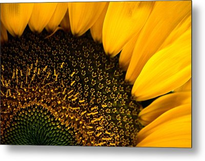 Close-up Of A Sunflower Metal Print by Todd Gipstein