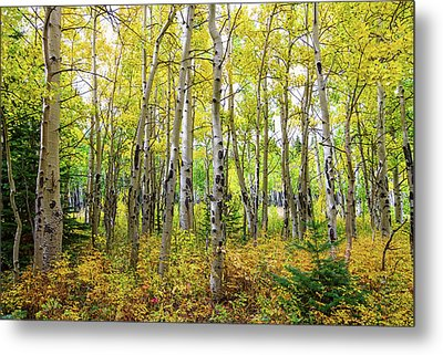 Colorado Backcountry Forest Metal Print by James BO Insogna