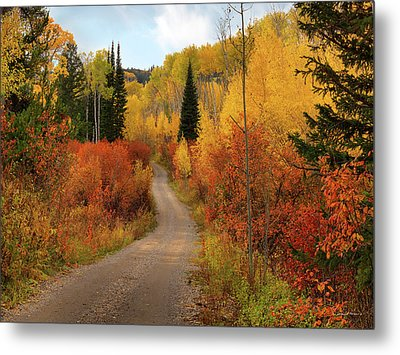 Country Road In Autumn Metal Print by Leland D Howard