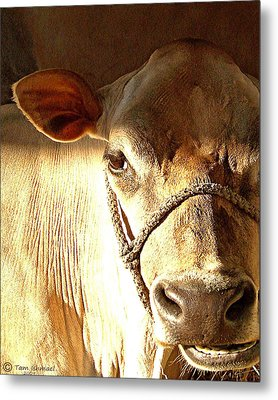 Cow Face Metal Print by Tammy Ishmael - Eizman