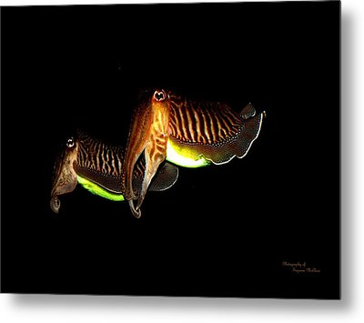 Cuttlefish Metal Print by Suzanne  McClain