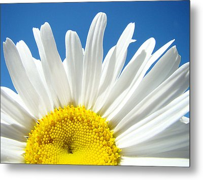 Daisy Art Prints White Daisies Flowers Blue Sky Metal Print by Baslee Troutman