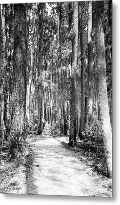 Deep In The Woods  Metal Print by Phill Doherty