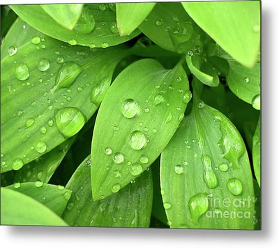 Drops On Leaves Metal Print by Carlos Caetano
