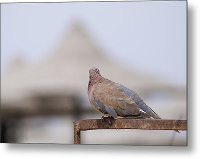 Egypt Metal Print by Be Lucca
