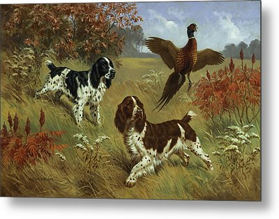 Energetic English Springer Spaniels Metal Print by Walter A. Weber