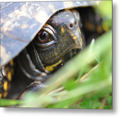 Eye Of The Beholder Metal Print by Joan Kerns