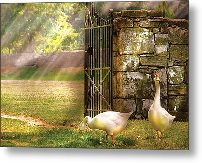 Farm - Geese -  Birds Of A Feather Metal Print by Mike Savad
