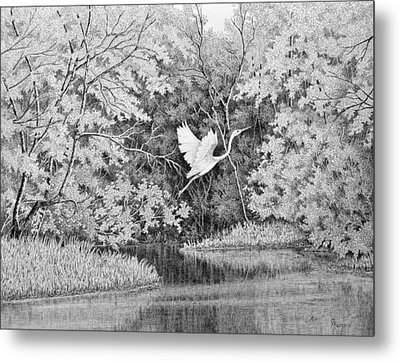 Flight Over The Bogue Falaya Metal Print by Colleen Marquis