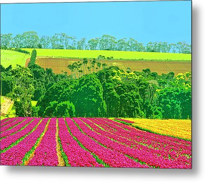 Flower Farm And Hills Metal Print by Dominic Piperata