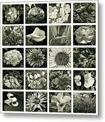Flower Favorites Bw Metal Print by Gwyn Newcombe