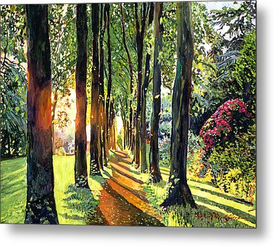 Forest Of Enchantment Metal Print by David Lloyd Glover