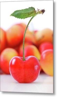 Fresh Ripe Cherries Isolated On White Metal Print by Sandra Cunningham