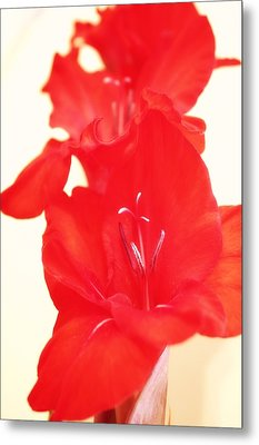 Gladiola Stem Metal Print by Cathie Tyler