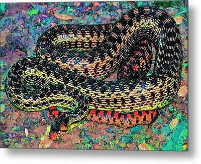 Gopher Snake Metal Print by Pamela Cooper