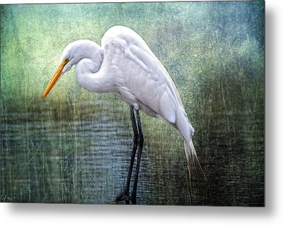Great White Egret Metal Print by Bonnie Barry