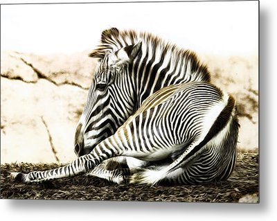 Grevy's Zebra Metal Print by Bill Tiepelman